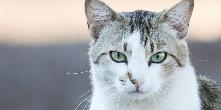 Gatos é tema de informativo da Prefeitura