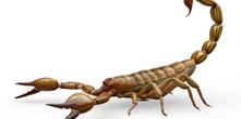 Campanha previne dengue e escorpiões